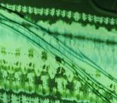 Dis.g0505 raso pier verde